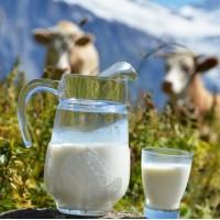 Хранение молока после дойки