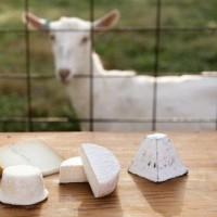 Особенности приготовления сыров из козьего молока