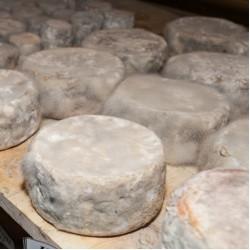 Нежелательная ПЛЕСЕНЬ на сыре: причины и способы устранения