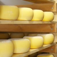 Созревание и хранение сыра