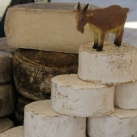 Разновидности сыров из козьего молока